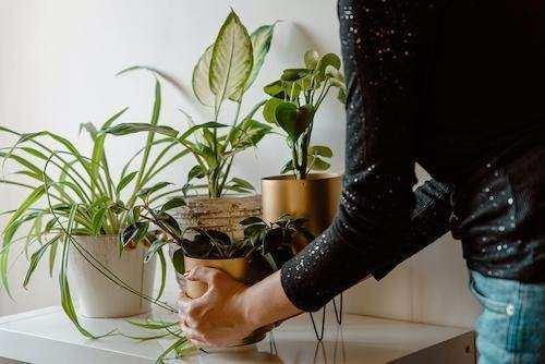 Hal-Hal Kecil yang Bisa Kamu Lakukan Untuk Lingkungan
