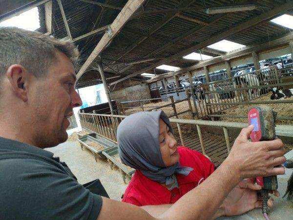 Farmer2Farmer Turut Mendukung Peningkatkan Kesejahteraan Peternak Sapi Perah