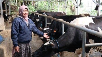 Membangun Keterampilan dan Keahlian Peternak Perempuan Kelola Peternakan Sapi Perah melalui Program Kartini Peternak Indonesia