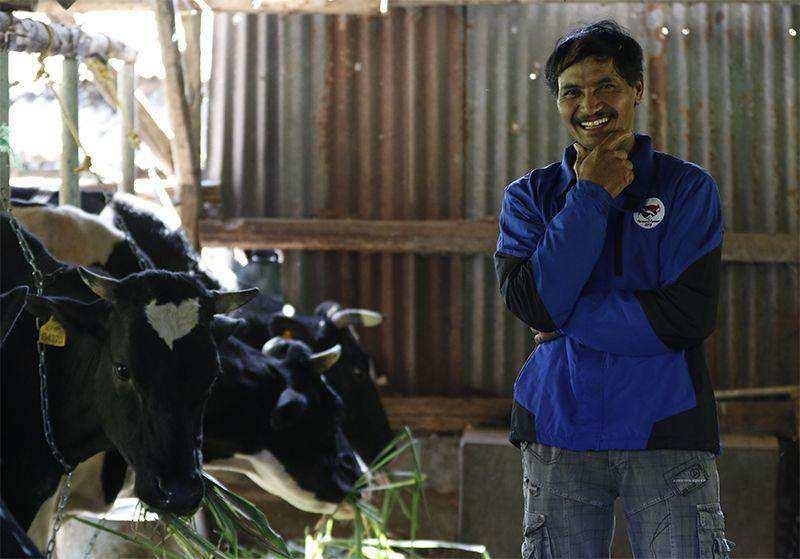 Program Farmer2Farmer Wujud Nyata dalam Meningkatkan Kesejahteraan Peternak Sapi Perah di Indonesia